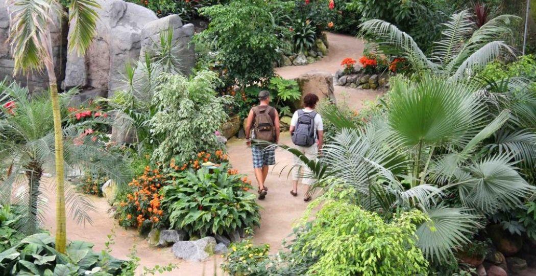 Trouwen tussen de fladderende vlinders? Het kan bij de Orchideeën Hoeve! Foto: Orchideeën Hoeve.