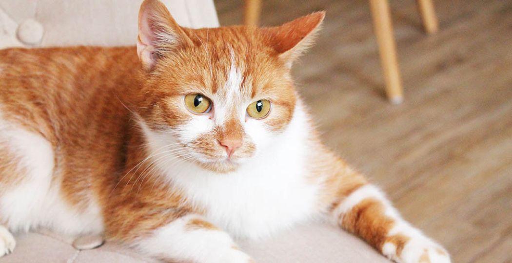 Een kat ligt er ontspannen bij in kattencafé Op z'n Kop. Foto: Kattencafé Op z'n Kop.