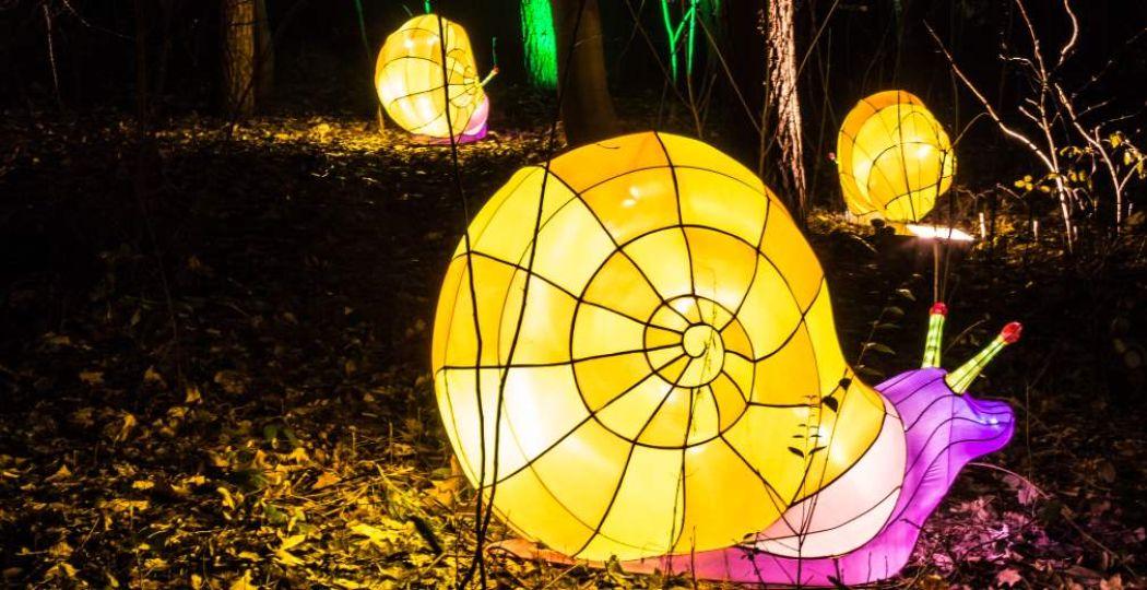 Ontdek lichtgevende slakken bij Burgers' Zoo. Foto: Burgers' Zoo