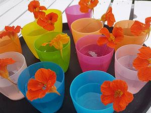 Foto: Zomerbloemen Pluktuin © Anne-Marie Fontijn.