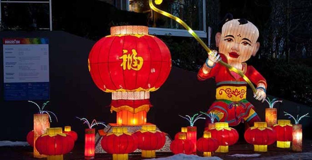 China Light in de dierentuin: maak kennis met een Chinese traditie. Foto: Burgers' Zoo