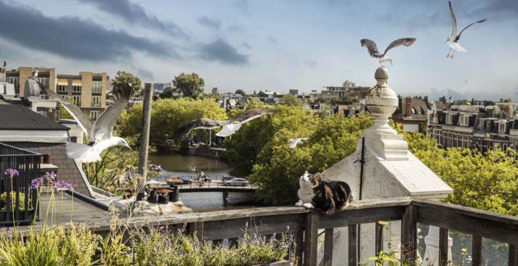 Bioscoopfilm De Wilde Stad. Foto: EMS FILMS / Frans Lemmens