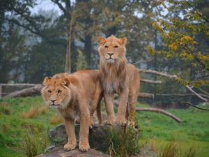 Foto: ZooParc Overloon