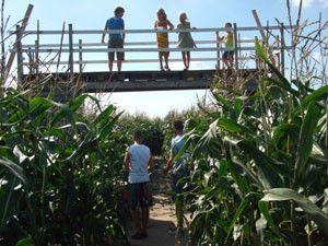 Maïsdoolhof / Bloemenboerderij