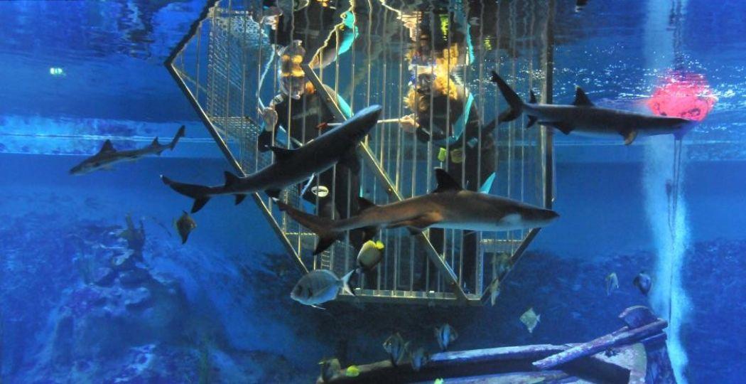 Zwem tussen de haaien in een speciale duikkooi. Foto: Neeltje Jans.