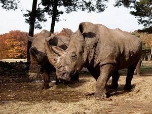 Tijgers in de Rimba. Foto: Burgers' Zoo, © Theo Kruse.