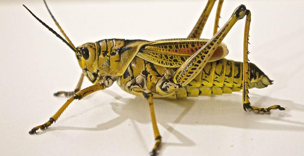 Duurzaam, gezond en blijkbaar nog lekker ook: insecten als maaltijd. Foto:  Pexels.com, CC0 License .