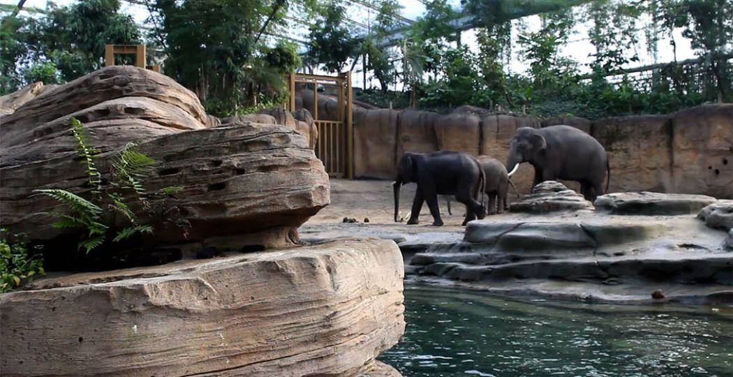 Olifanten in WILDLANDS. Welk dierenpark in het Noorden is jouw favoriet? Foto: DagjeWeg.NL.