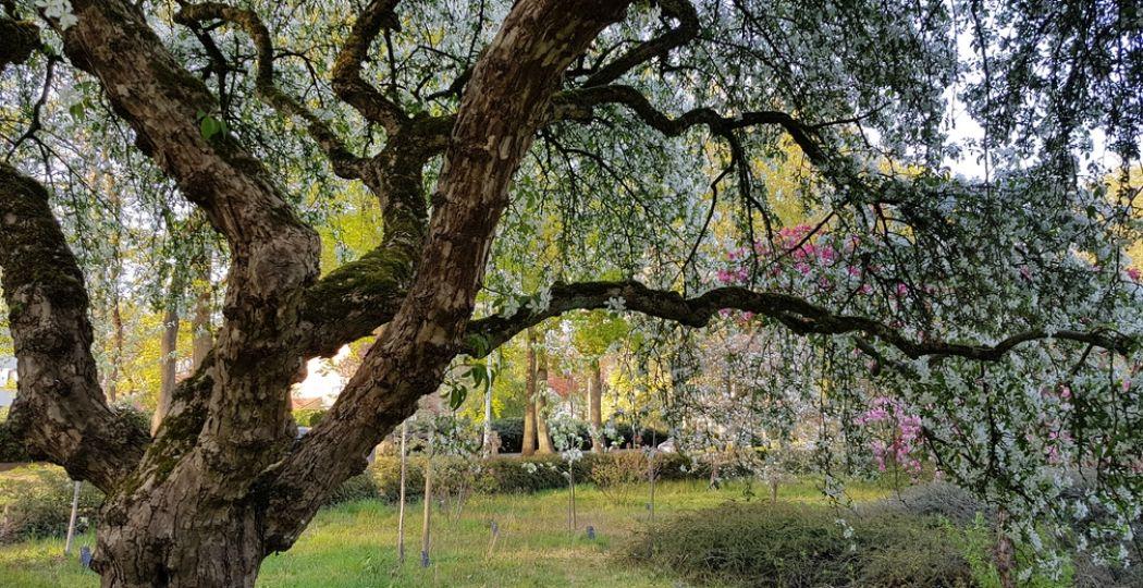 Genieten van de lentebloesem in een mooie tuin of arboretum. Foto: DagjeWeg.NL / Tonny van Oosten