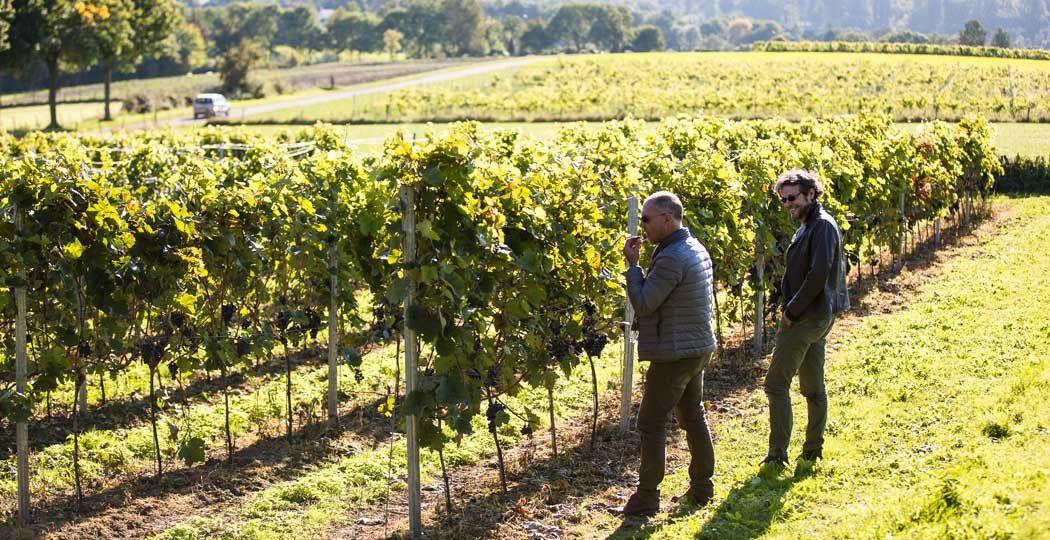 Zuid-Frankrijk? Nee, Zuid-Limburg! Dit idyllische plaatje is gemaakt bij een wijngaard bij Elkenrade. Foto: © Visit Zuid-Limburg