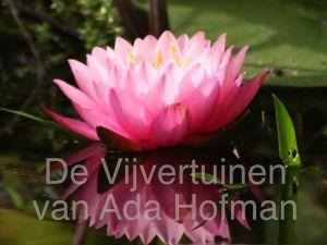 Geniet van kleurrijke bloemen. Foto: De Vijvertuinen van Ada Hofman