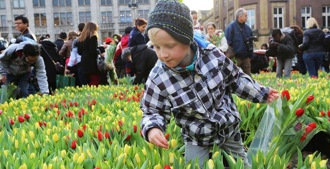 Het tulpenseizoen is geopend! Kom zaterdag gratis tulpen plukken op de Dam tijdens de Nationale Tulpendag. Foto: Tulpentijd.nl / VidiPhoto.