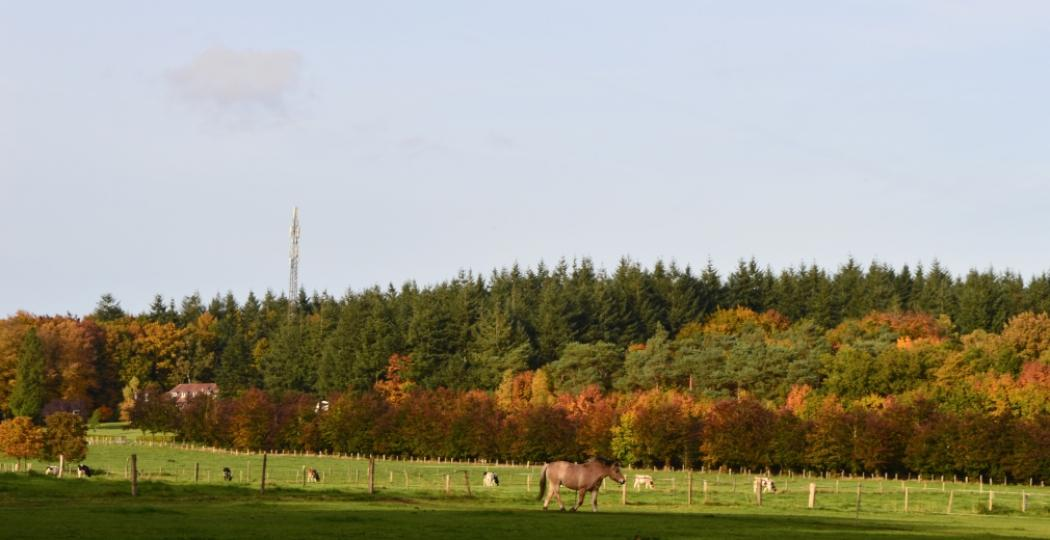 Ontdek een paar van de mooiste bossen en natuurgebieden van Nederland. Foto: DagjeWeg.NL.