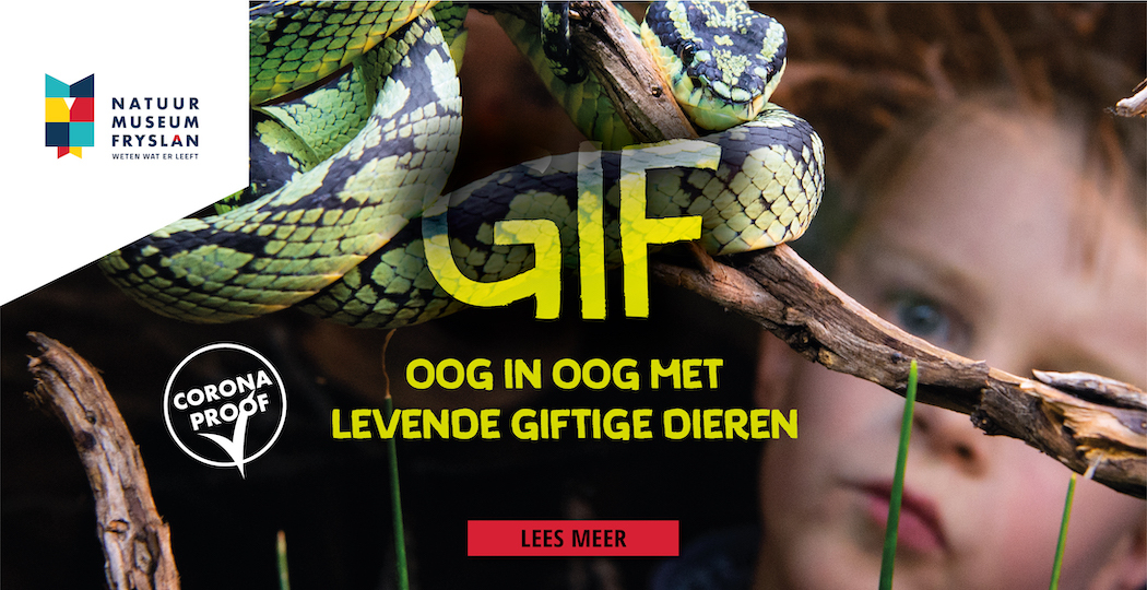 Spannend: ontdek alles over gif!