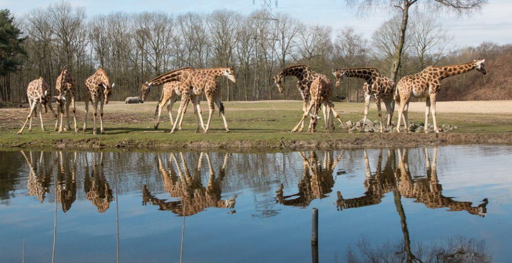 Foto: Koninklijke Burgers' Zoo.