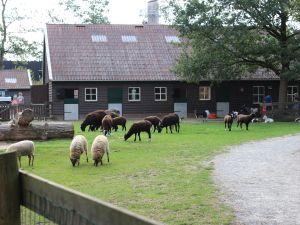 Kinderboerderij De Hofstede