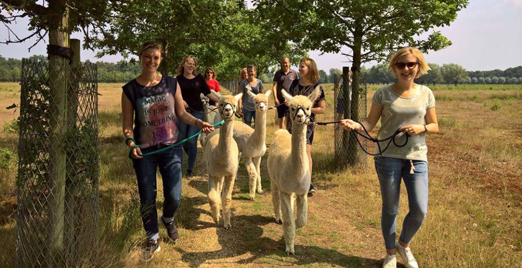 Wandelen met alpaca's: voor liefhebbers van de bijzondere, wollige beestjes een droom die uitkomt! Foto: Alpacafarm Vorstenbosch.