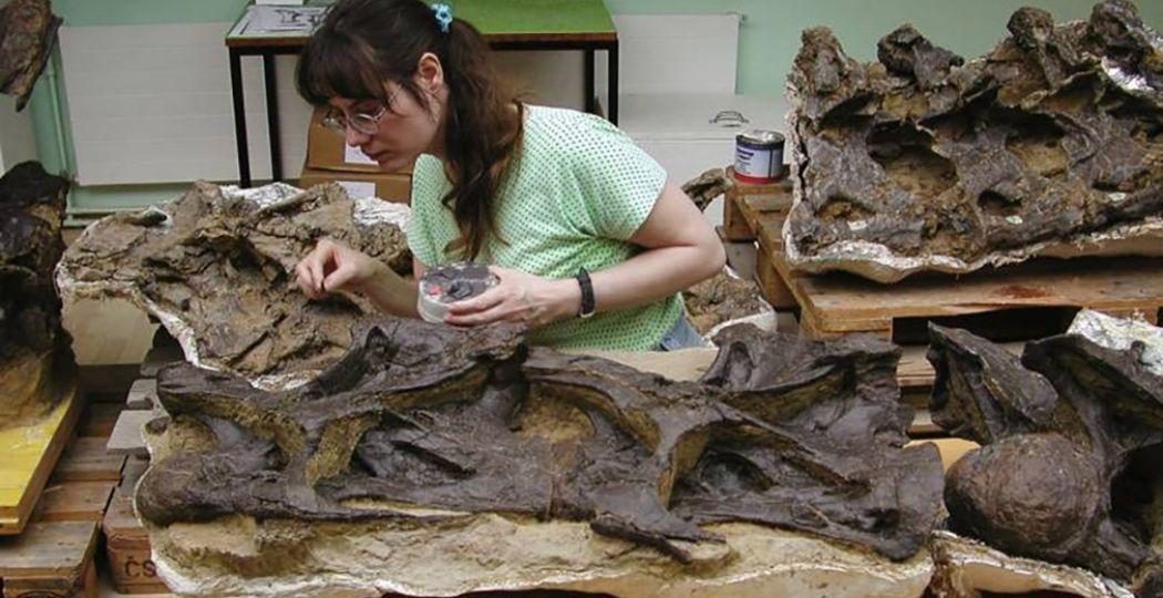 De botten worden voorzichtig losgemaakt van het gesteente. Foto: Oertijdmuseum Boxtel