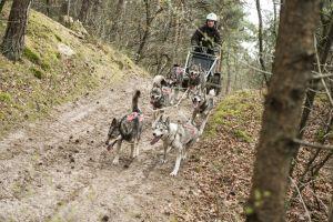 De honden hebben er zin in. Foto: Lowland Pack © Wendy de Graaf