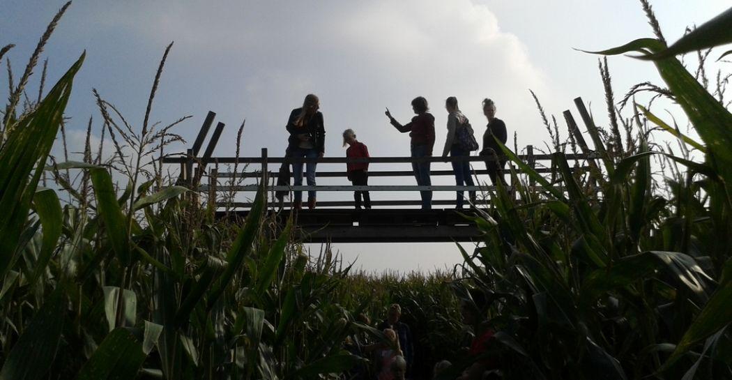 Vanaf de hoge brug kijken waar je bent en hoe je verder moet... Het is weer tijd voor de maisdoolhoven! Ga bijvoorbeeld op avontuur in het maisdoolhof van de Bloemenboerderij. Foto: De Bloemenboerderij © Johan Schoonderwoerd
