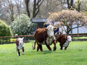 Beleefboerderij De Eekhoeve
