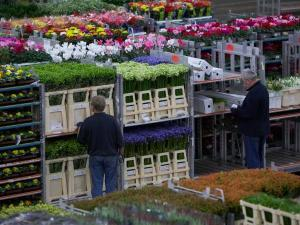 Foto: Royal FloraHolland.