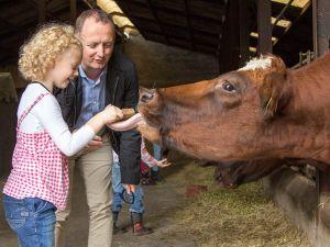 Een koe eet zo uit je hand. Foto: De Steenuil.