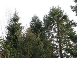 Het laagste arboretum ter wereld ligt vier meter onder Amsterdamse peil. Foto: DagjeWeg.NL