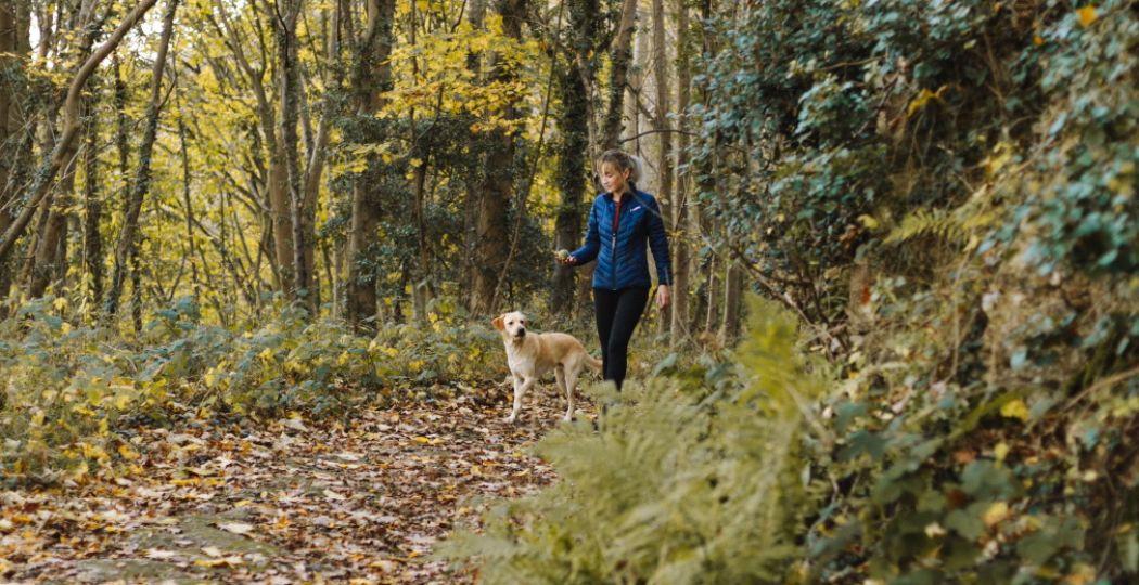 Waar kunnen jij en je hond terecht voor een dagje uit in Zuid-Holland? Lees verder! Foto:  Pexels.com .