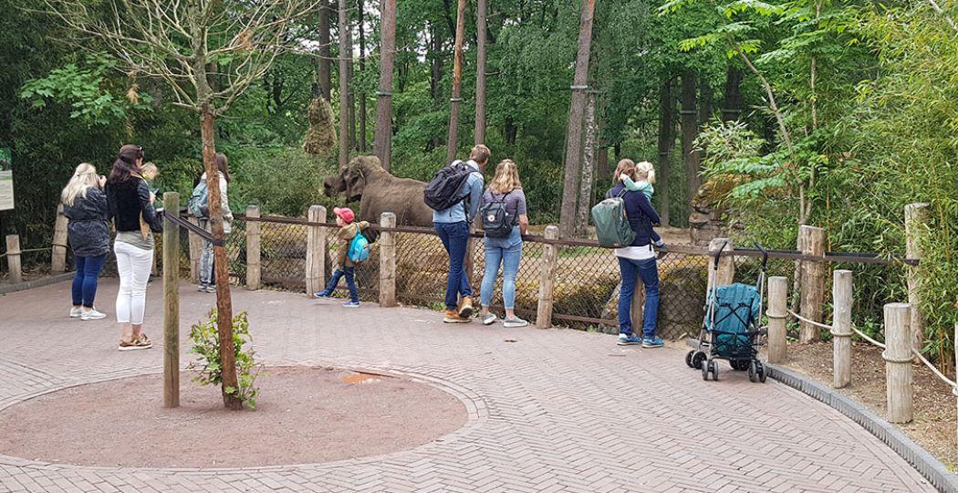 Bezoekers van Burgers' Zoo kijken op 1,5 meter afstand van elkaar naar de olifanten. Kijkspots op de grond geven aan waar je moet staan. Foto: DagjeWeg.NL