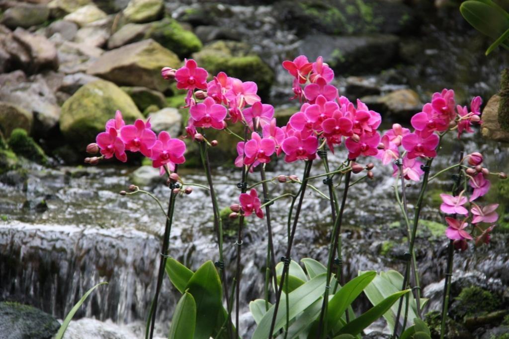 Bewonder betoverende bloemen. Foto: Orchideeën Hoeve.