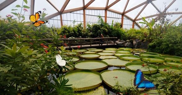 Tropische waterplanten