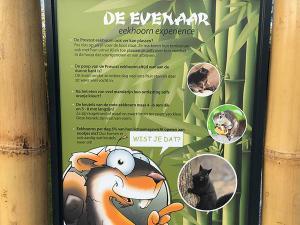 Leer alles over eekhoorns. Foto: Eekhoorn Experience.