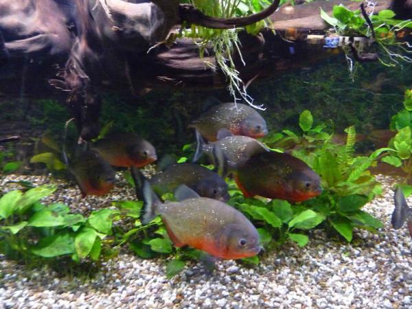 Een wondere onderwaterwereld. Foto: Aqua Zoo