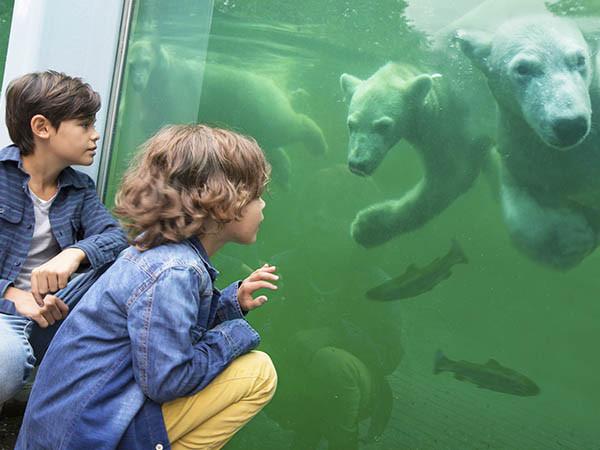 Ontmoet de ijsbeertweeling.