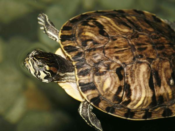 Foto: Het Schildpaddencentrum