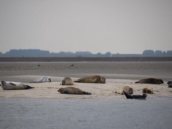 Ontdek de prachtige Westerschelde. Foto: ScheldeSafari.