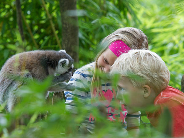 Bekijk allerlei apen! Foto: Apenheul.