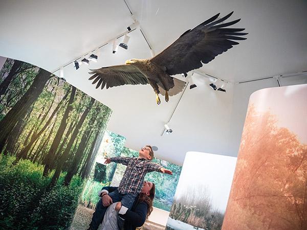 Meevliegen. Foto: Archief Biesbosch MuseumEiland