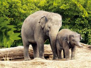 Ga op visite bij de olifantenfamilie. Foto: Diergaarde Blijdorp © Rob Doolaard.