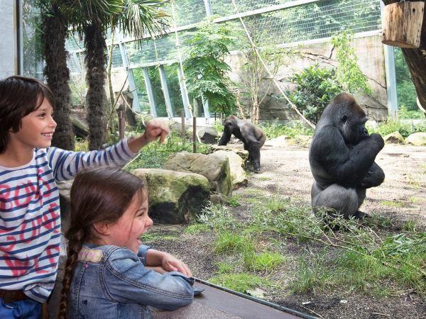 Sta oog in oog met de gorilla's.