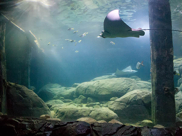 Bewonder de Ocean. Foto: Burgers' Zoo, © Theo Kruse.