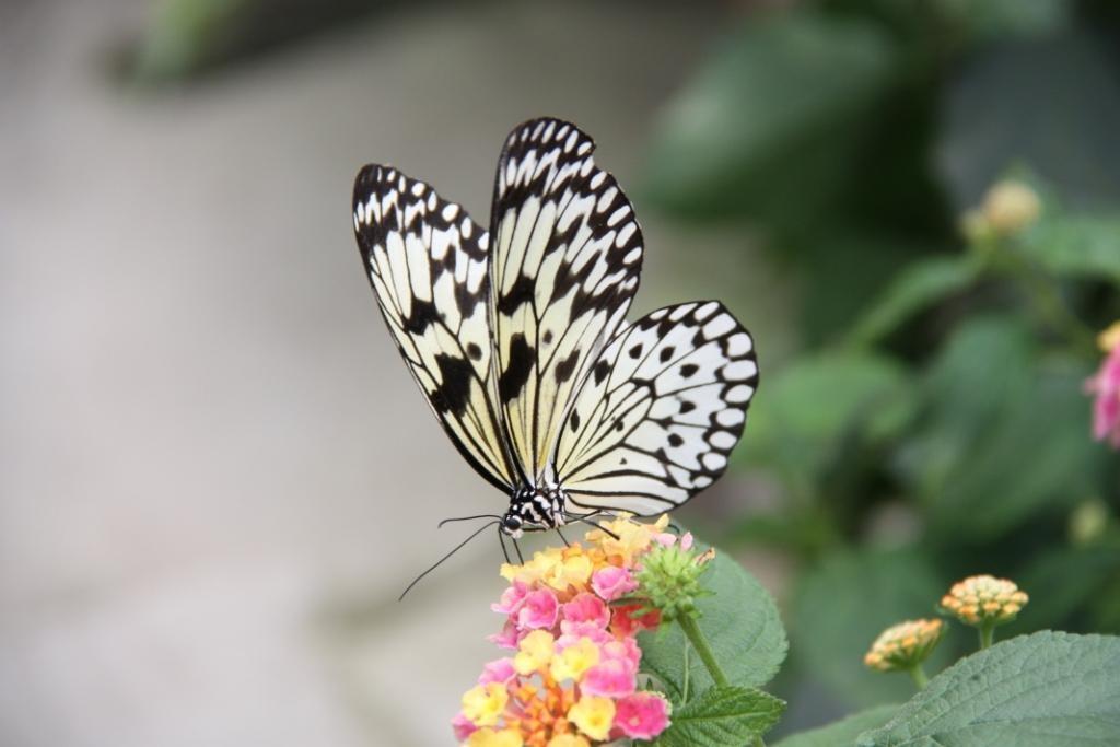 Bezoek de Vlinder Vallei. Foto: Orchideeën Hoeve.