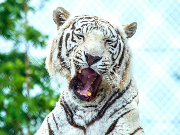 Bekijk exotische dieren.