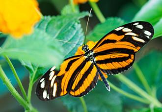Bekijk honderden tropische vlinders. Foto: Klein Costa Rica.