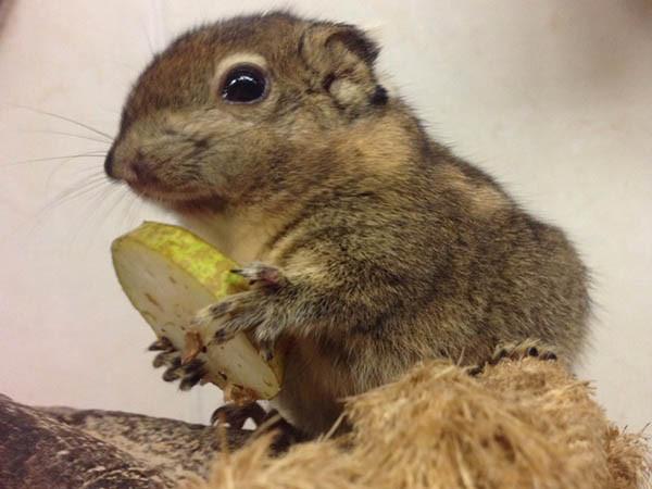 Voer de eekhoorntjes. Foto: Eekhoorn Experience.